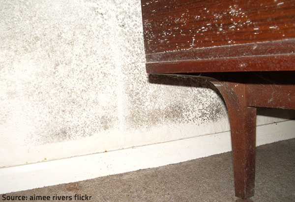 How To Remove Mold Smell From Sofa Sofa Ideas