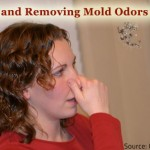 How to get rid of musty smell in house.