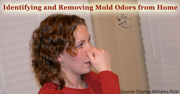 identifying mold odors and removing them from your home. Black Bedroom Furniture Sets. Home Design Ideas