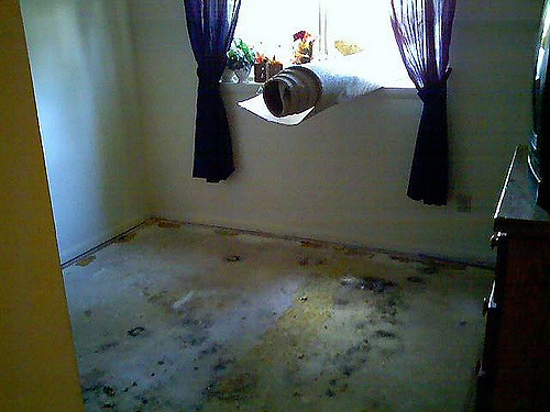 In any event that you are overwhelmed by mold on your carpet, call for professional mold removal services