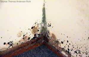 Allow a professional to remove medium to large mold growth cases.
