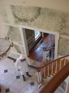 Always call a mold remediation professional like ServiceMaster when finding mold growth.