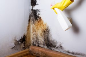 Mold-Remediation-ServiceMaster
