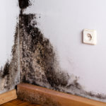 Mold-on-the-Wall
