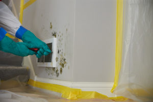 Hands of a professional Mold Removal technician