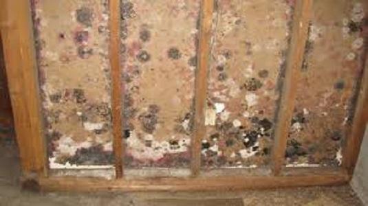 hidden mold inside a wall